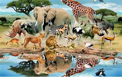 Animal Animals Mural Water Wild Trees Grass