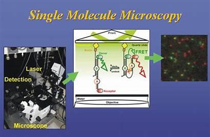 Molecule Single Microscopy Fluorescence Lab Walter Fret