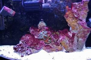 How To Get Rid of Cyanobacteria (Red Slime Algae) - Mad ...