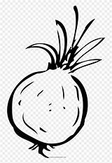 Onion Coloring Clipart Line Pinclipart sketch template