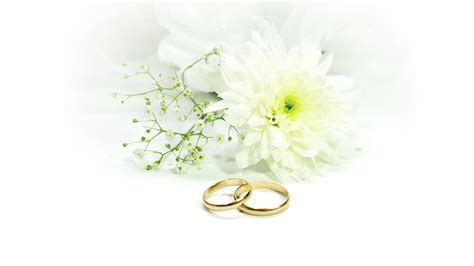 wedding rings with white background wallpaper wallpaper