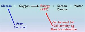 Cellular Respiration Equation In Words