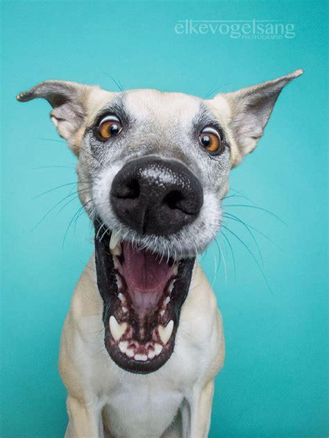 la fotografa elke vogelsang capta las expresiones de perros