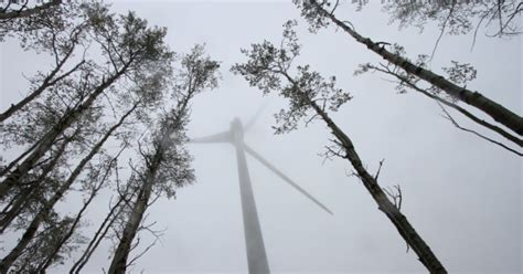 Northern B.c. Wind Storm Cuts Power To Thousands