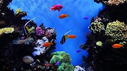 Tropical 4k Fish Desktop Underwater Backgrounds Ultra