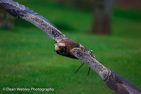 The International Center For Birds Of Prey Photography