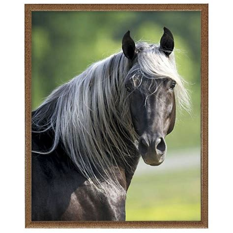 mountain rocky horse horses montana catching unframed print