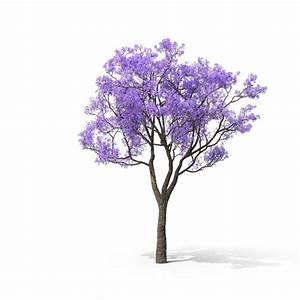 Flowering Tree PNG Images & PSDs for Download PixelSquid