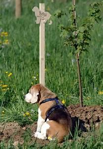 Tiere Im Garten Begraben : k mmerst du dich gut genug um dein haustier ~ Lizthompson.info Haus und Dekorationen
