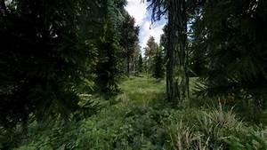 4k, Forest, At, Skyrim, Nexus