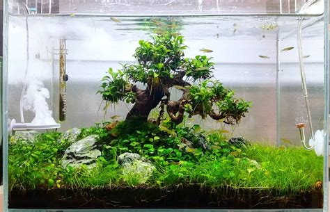 Fluval Edge Aquascape by Fluval Edge 6 Gallon Bonsai Aquascape Tank Aquascaping