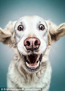 Hilarious hounds are captured looking their absolute ...