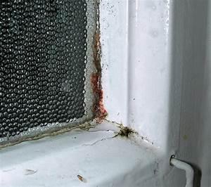 Schwarzer Schimmel Fenster : schwarzer schimmel ~ Whattoseeinmadrid.com Haus und Dekorationen