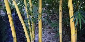 Quand Tailler Les Arbustes De Haies : taille des bambous quand et comment tailler ses bambous ~ Dode.kayakingforconservation.com Idées de Décoration
