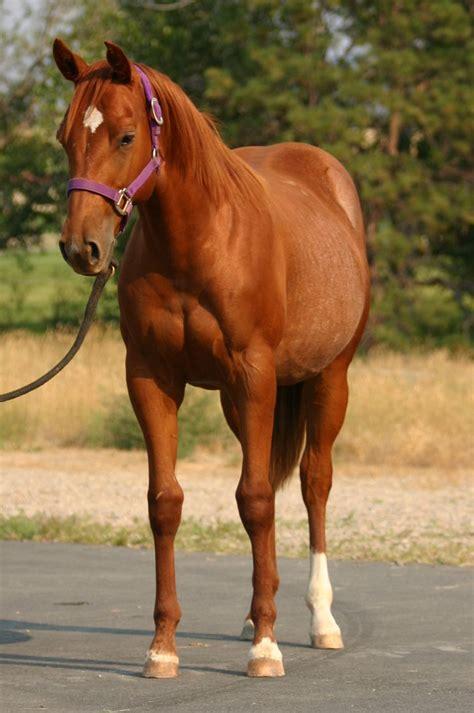 horse names horses most chestnut mare popular beauty buzzsharer honey baby stallion toby riding coco dakota sweet had