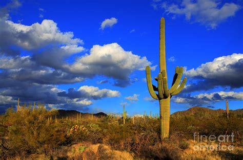 arizona landscape pictures pin arizona landscape on pinterest