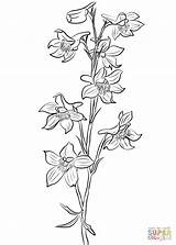 Larkspur Coloring Pages Flower Flowers Tattoo Drawings Line Birth Tattoos Drawing Plants Delphinium July Printable Supercoloring Month Paper Categories sketch template