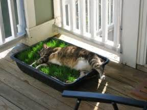Grass in a Planter Box for Cats