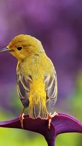 Wallpaper bird, 4k, Animals #16173  Bird