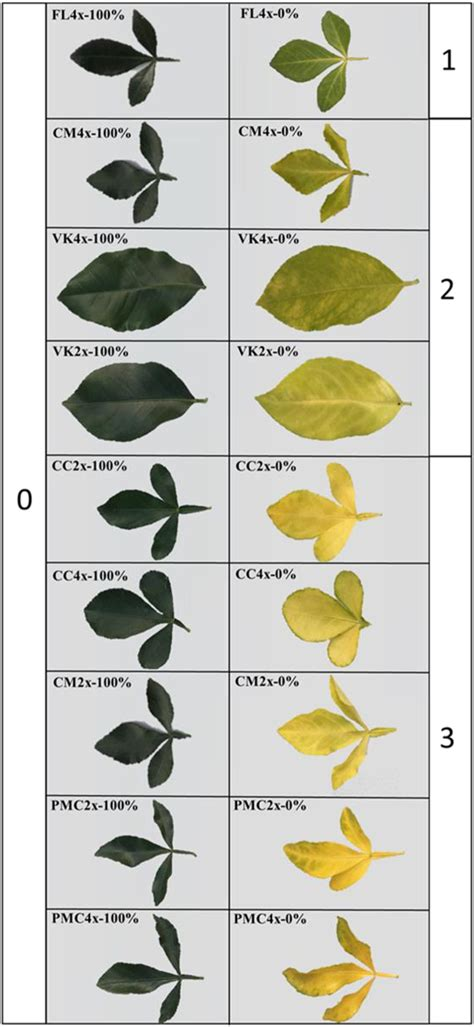 frontiers nutrient deficiency tolerance  citrus