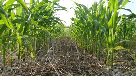 conséquences du passage au semis direct charges en semis