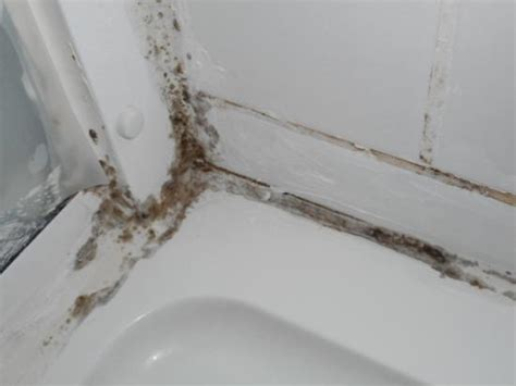 Kill Black Mold In Shower by Unusable Soap Dish In Shower Cubicle In Bathroom Picture