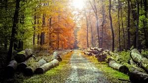spring, , forest, , wood, , path, , sunlight, , photo, manipulation