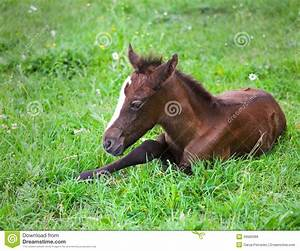Newborn Baby Horse On The Green Grass Stock Photo - Image ...