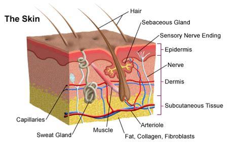 Psoriasis cuero cabelludo tratamiento natural
