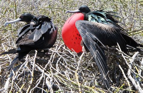 bird mating rituals