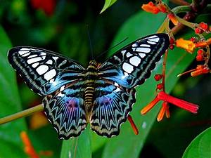 Top 10 Most Beautiful Butterflies in the World.Butterflies ...
