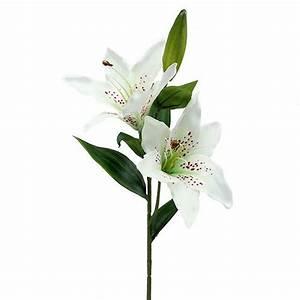 Lilie Topfpflanze Kaufen : lilie wei 66cm kaufen in schweiz ~ Lizthompson.info Haus und Dekorationen