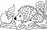Coloring Hedgehog Hedgehogs Sheet Pages Cute Outline Printable Baby Getcoloringpages Realistic Animal sketch template