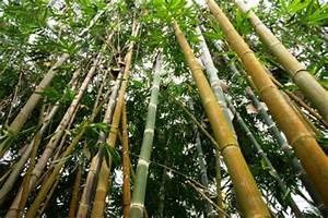 Bambus Terrassendielen Preis : bambus terrassendielen die kologische alternative f r dauerhaft sch ne terrassen ~ Frokenaadalensverden.com Haus und Dekorationen