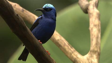 explore the world of birds and biodiversity youtube