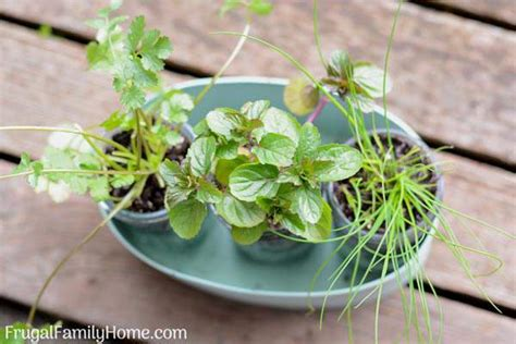 Diy Windowsill Herb Garden, Simple Garden Gift