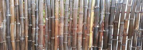 Stuoie Di Canne by Canne Di Bamboo Arelle E Cannicci In Bamb 249 Banbamboo