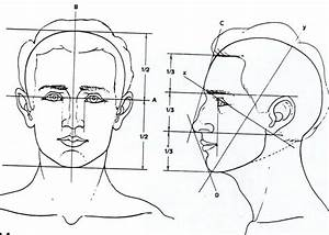 Head Proportions  Lining Up The Features In Relation To