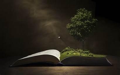 Background Tree Wallpapers Books Knowledge Desktop Laptop