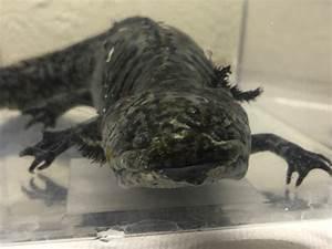 Meet, The, Axolotl, U2014, City, Of, Albuquerque