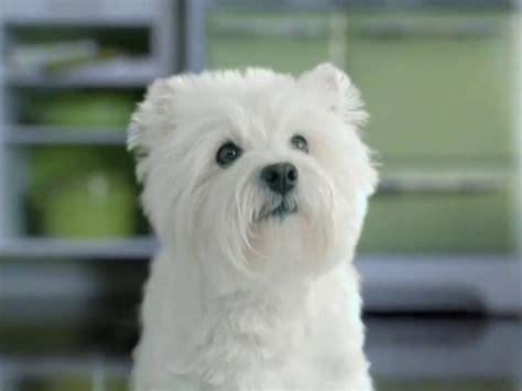 caesar dog