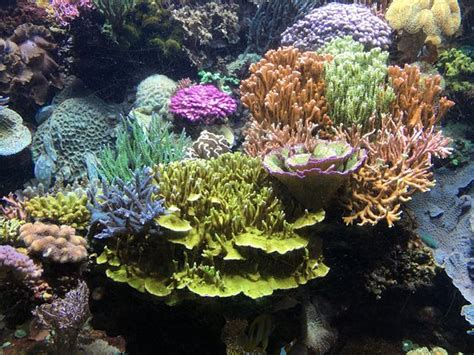 aquarium du cap d agde aquarium du cap d agde bild fr 229 n aquarium du cap d agde cap d agde tripadvisor