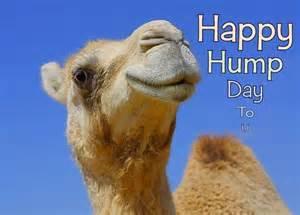 Happy Hump Day Camel