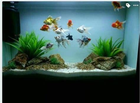 decorated pet fish tanks    quora