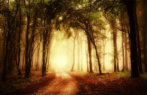 misty clearing forest wall mural muralswallpapercouk