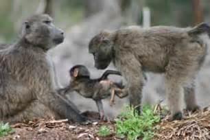 South Africa Wild Animals
