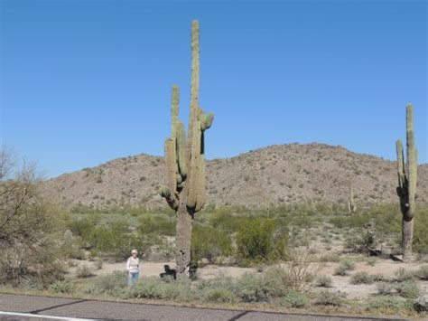 tucson visitors bureau 20160310 142001 large jpg picture of rincon mountain