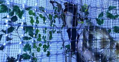 Gabbia Per Petauro - petauro dello zucchero gliders la gabbia per