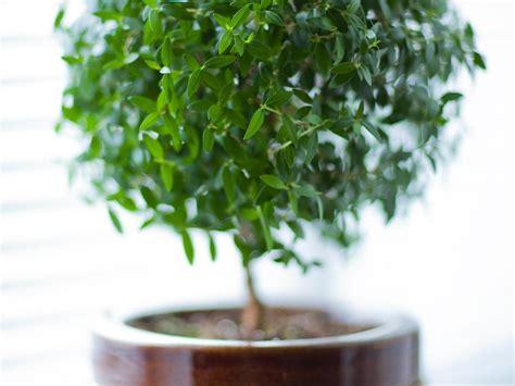 plante dans une chambre mettre une plante dans sa chambre bonne ou mauvaise idée