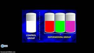 UNDERSTANDING A CONTROLLED EXPERIMENT - YouTube